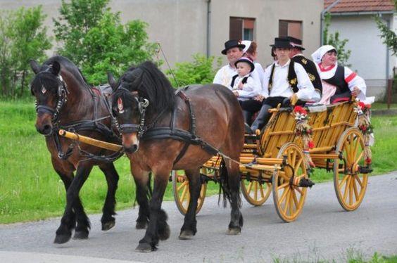 Hrvatski hladnokrvnjak Croatian Horse